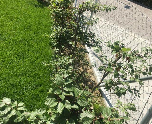 Bepflanzung_014