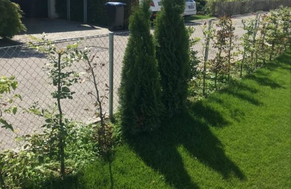 Bepflanzung_019
