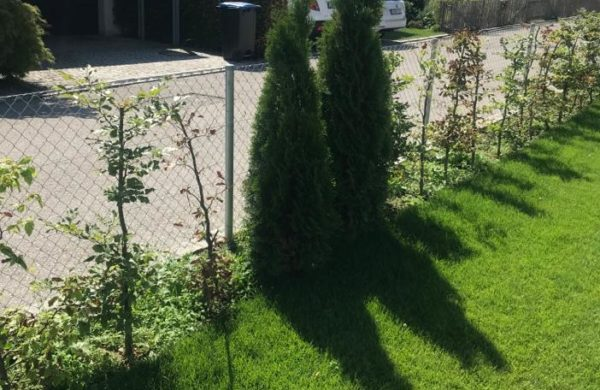 Bepflanzung_020