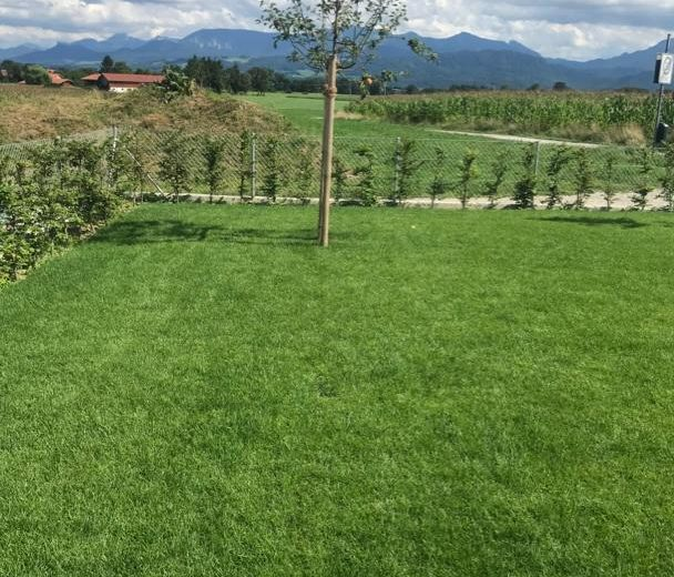Bepflanzung_023